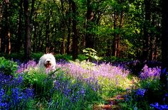 where's the dog ? by dewollewei, via Flickr