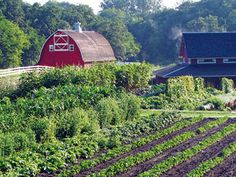 Decorah, Iowa--Seed Savers Exchange, heirloom gardens and orchards