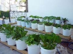 Rain Gutter gardening - water-conserving, plant nurturing, weed and varmint-reducing, lazy gardening!
