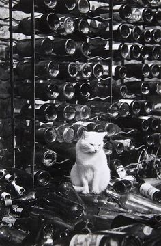 Cat in a wine cellar   from City Cats, by Brassaï