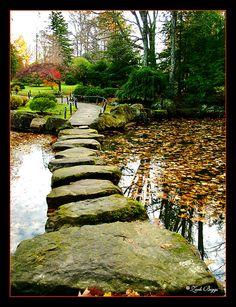 #Gardens   #garden   #gardening   rain