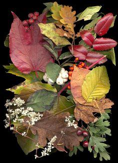 Herbst-Arrangements als Objektscans 2014