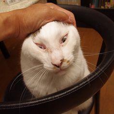 おはヨウカンさん!Good Morning Yohkan-san! #cats #neko #yohkan なでなでなでーーー! - @kachimo- #webstagram