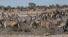 Wildlife Photography, Safari, National Parks, Uk Trip, Highlights, September, Join, Animals, Instagram