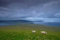 Noss, Shetland by Andrea Verni on 500px