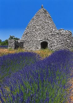 Lavender postcard from Provence