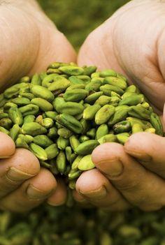 Italy - Sicily -pistachios