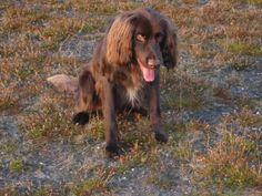 our dog yuri