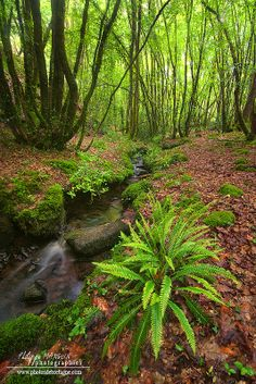 Forest stream and fern Beautiful World, Beautiful Places, Photo Bretagne, Image Nature, Walk In The Woods, Fauna, Best Photographers, Tree Forest, Landscape Photos