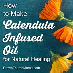 Calendula is anti-inflammatory and antibacterial. But you won't heal just by rubbing flowers on your skin! It's easy to infuse oil for use in healing salves and lotions.