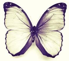 Vintage butterfly <3 so sweet and lovely