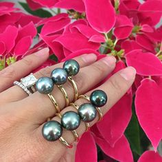 This Tahitian Pearl Ring has one beautiful AAA Tahitian pearl. Please note Tahitian Pearls will have natural variations in color. The perfect Tahitian pearl ring to go from day to night! Black Pearl Jewelry, Gems Jewelry, Beaded Jewelry, Jewelery, Pearl Rings, Tahitian Pearl Ring, Pearl Gemstone, Tahitian Pearls, Most Expensive Pearl