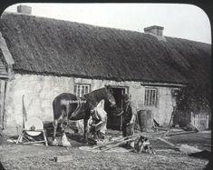 Smithy Blacksmith Horse Lantern Slide 1900 G W Wilson Farrier Rural image Blacksmithing, Lanterns, Horses, Ebay, Image, Blacksmith Shop, Lamps, Lantern, Blacksmith Forge