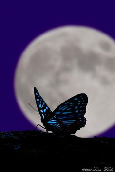 ~~The moon and butterfly by Tomoaki Kabe~~