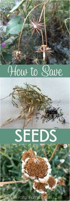 Seed saving is a fantastic way to get more plants for next Summer.  Easy to…
