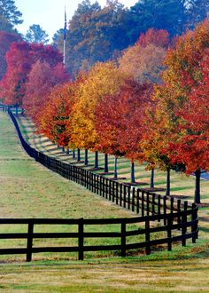 Simple fence but elegant