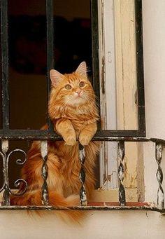 Pretty orange cat on the balcony