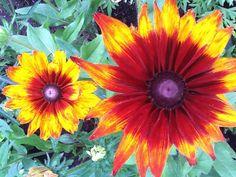 Flor de Oslo