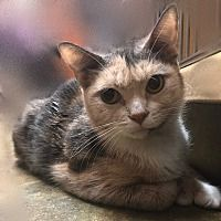 Pin By Michele Grubb On Help Rescue All Animals Pet Adoption Pets Cats With Big Eyes