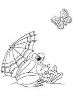 kikker en vlinder