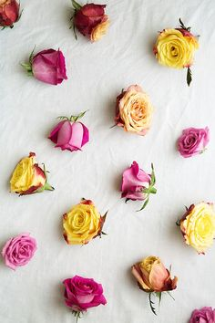 Pink and yellow roses by Ruth Black - Rose, Background - Stocksy United Ps Wallpaper, Wallpaper Iphone Disney, Flower Wallpaper, Wallpaper Backgrounds, Trendy Wallpaper, Makeup Wallpapers, Pretty Wallpapers, Flower Backgrounds, Photo Backgrounds