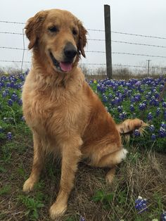 Riley from Texas