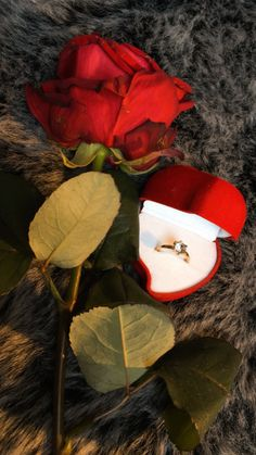 Pretty Photos, Love Photos, Foto Snap, Bunch Of Red Roses, Rose Flower Wallpaper, Applis Photo, Hand Photography, Tumblr Love, Couple Photoshoot Poses
