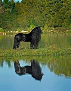 https://www.facebook.com/Awesome.Animals Wow, Black Beauty for sure!