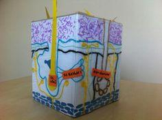 Cube, Homeschool, Science, Homeschooling
