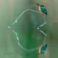 Heart reflection.