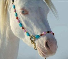 Albino horse, when our Lord returns, will be such a sight - He created all, and did it so beautiful!