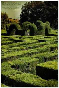 Labyrinthus, the green maze by RauLopez on Flickr