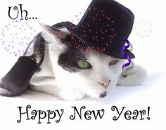 happy-new-year-cat-pictures-