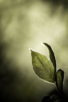 """Leaf"" ~ Photography by aravis121"