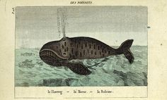 Les Poissons: le Hareng, la Morue, la Baleine. / 	Dufrénoy, Mme., 1765-1825 -- Author / colored wood engraving