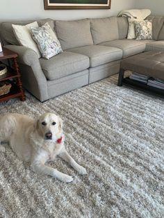Kane Virtuoso area rug Area Rugs, Design Inspiration, Throw Pillows, Rugs, Layout Inspiration, Cushions, Throw Rugs, Decorative Pillows, Decor Pillows
