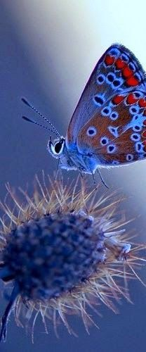 Blue butterfly                                                                                                                                                                                 More