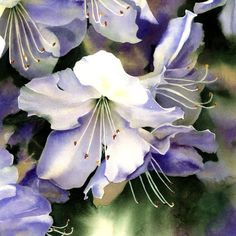 Watercolor Floral Print White Flowers Painting by AlisaPaints,