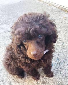 Teddy Boy  Curls Get The Girls
