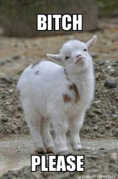 Baby animals are all adorable. If you think goats can't be cute, you better think again. Here's a list of the cutest mini goats you will ever see. Cute Little Animals, Cute Funny Animals, Cabras Animal, Cute Goats, Mini Goats, Baby Goats, Baby Pygmy Goats, Tier Fotos, Cute Creatures