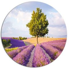 Design Art Bring contemporary abstraction to your home with this circle metal wall art. This modern 'Lonely Green Tree in Lavender Field' Landscape Photographic Print on Metal makes it the focal point of any room or office. Size: H x W x D Christmas Tree Ornament Hooks, Purple Roses, Lavender Roses, Rose Flowers, Circle Metal Wall Art, Container Flowers, Lavender Fields, Green Trees, Design Art