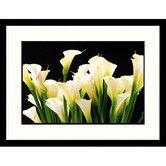 Found it at Wayfair - Florals Calla Lilies Framed Photographic Print