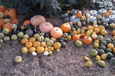 gourds at godinton house