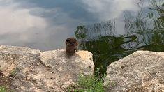 Duck diving - YouTube Diving, Mount Rushmore, Birds, Mountains, Youtube, Travel, Viajes, Scuba Diving, Bird