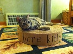 """I saw this on Pinterest and had to make one for my cats. My daughter worries that when I get old I will become a """"crazy cat lady"""" I believe this project brought me one step closer! I collected a bu..."""