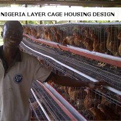 Chicken Rearing, Chicken Cages, Poultry, Modern, Design, Backyard Chickens, Trendy Tree, Design Comics