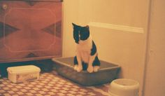 Feng shui your cat's litter box area for a home that looks fresh
