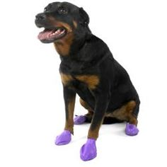@Overstock - Pawz dog booties offer protection from ice, snow, salt, lawn chemicals, allergies, hot pavement and more. The booties are disposable, reusable, waterproof, and biodegradable.http://www.overstock.com/Pet-Supplies/Pawz-Large-Purple-Dog-Booties-Pack-of-12/6609033/product.html?CID=214117 $16.00