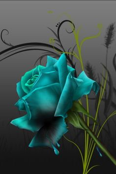 """A rose, is a rose, is a rose - in any color. Gorgeous Turquoise Rose. I dedicate this rose in honor of what would have been my mothers 85th birthday. Happy Birthday Mom born1928 w/God 1999 - Love you, always """"your"""" Jessica :)"""