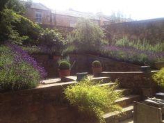 Motif Garden Design offers an exemplary service in Edinburgh merging design & nature to create beautiful, functional gardens. Edinburgh Scotland, Planting, Design Projects, Garden Design, Aquarium, Lavender, Nature, Beautiful, Plants